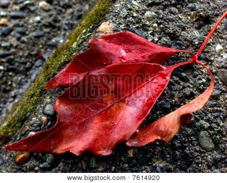Red Leaves and Concrete