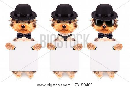 Dog dressed as mafia gangster with banner
