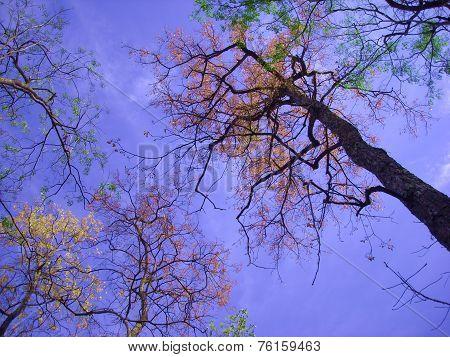 Autumn Tree Looking Up