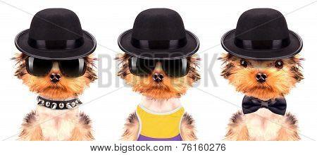 Dog dressed as mafia gangster