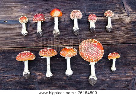 Mushrooms Fly Agaric Group On On Wooden Background