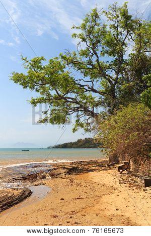 Tree On Beach Sand Sea Boat In Buzios, Rio De Janeiro