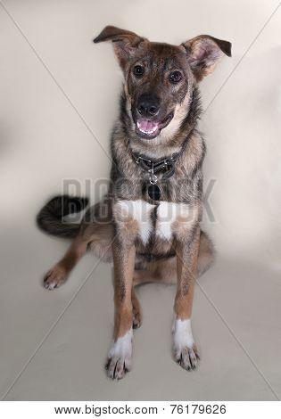 Grey Dog Collar Sitting On Gray
