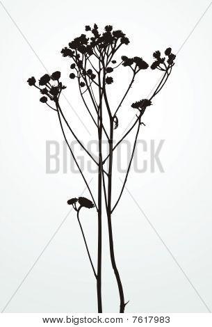 Silhouette plants