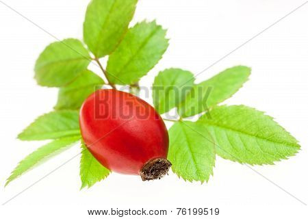 Rosehip Berries With Green Leaves