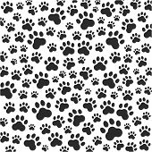 picture of paw  - Cat or dog paws background - JPG
