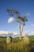 image of bute  - Ancient standing stones and a tree at an ancient site on Bute - JPG