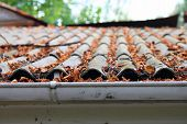 image of shingles  - Lots of autumn leaves on a roof closeup - JPG