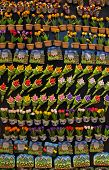 pic of keepsake  - Magnetic souvenirs in Amsterdam for sale to tourists - JPG
