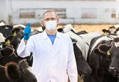 foto of vet  - portrait of vet  doctor at  farm cattle - JPG
