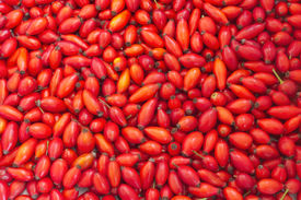 stock photo of wild-brier  - Background of red rose hips - JPG