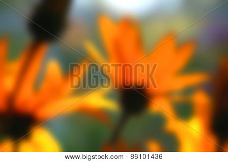 Blurry Background Of A Jerusalem Artichoke Plant