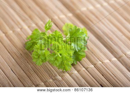 Fresh Curly Parsley Leaf