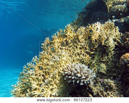 coral reef at the bottom of tropical sea on blue water background