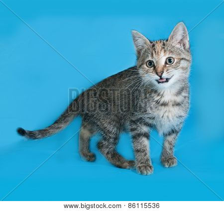Striped Kitten Standing On Blue And Meows