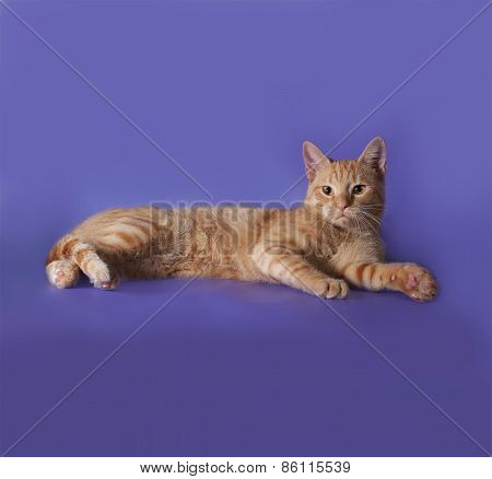 Red Cat Lying On Lilac