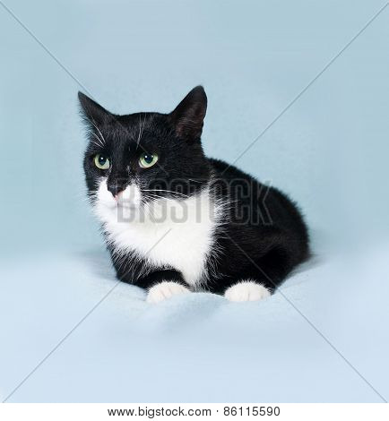Black And White Cat Lying On Blue