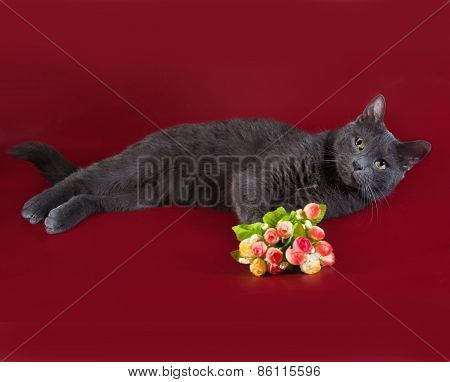 Russian Blue Cat Lying Next To Bouquet Of Flowers On Burgundy