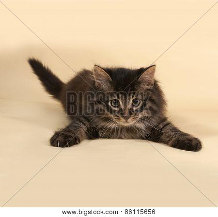 Fluffy Small Striped Kitten Lying On Yellow