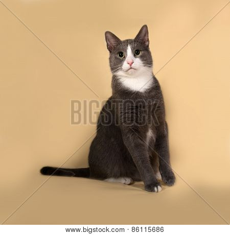 Grey And White Cat Sitting On Yellow