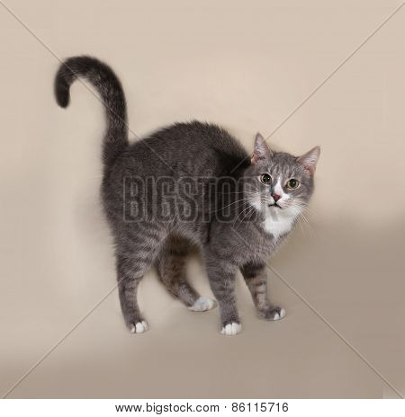 Gray Striped Cat Standing On Gray