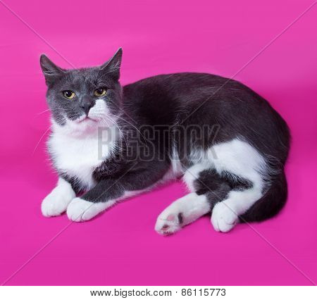 Gray Cat With White Spots Sitting On Pink