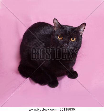 Black Cat With Yellow Eyes Lying On Pink