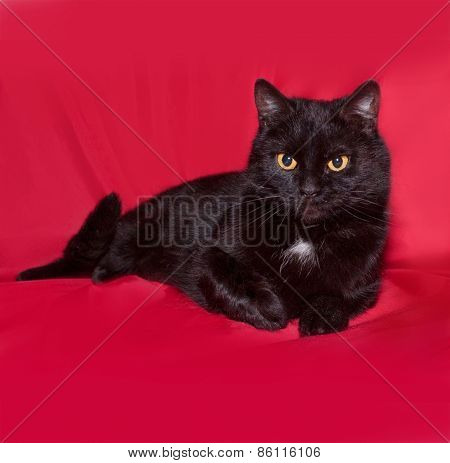 Black Cat Lying On Red