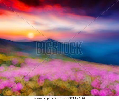 Great view of the magic pink rhododendron flowers. Retro filtered. Beauty world. Natural blurred background. Soft light effect.