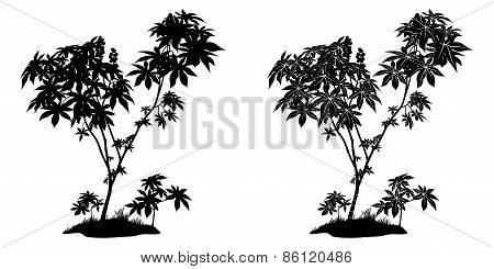 Castor Plant Contours and Silhouette