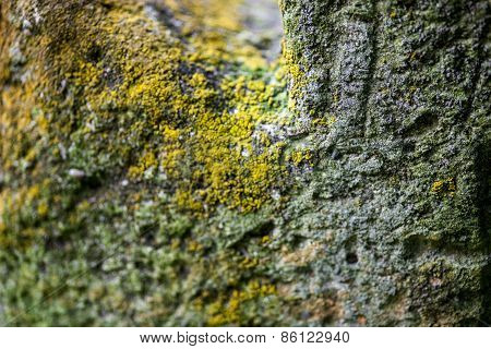 Moss-grown Surface Of The Old Stone Cross