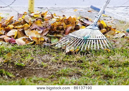 Raking leaf pile in autumn