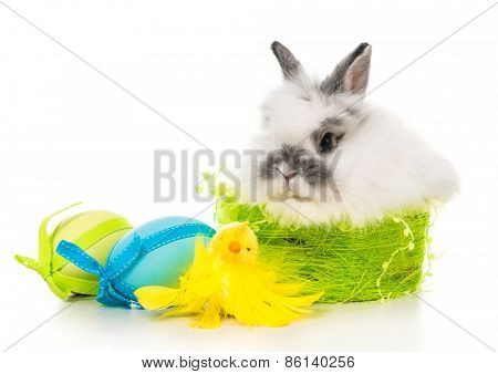 Easter pictures - rabbit  with colored eggs
