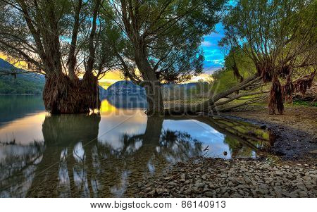 Trees In The Lake, Abruzzo, Italy