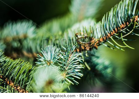 Wedding Rings Lie On The Branches Of Spruce