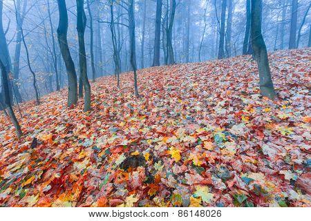 Autumnal Forest Landscape