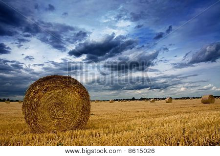 Rolled Wheat