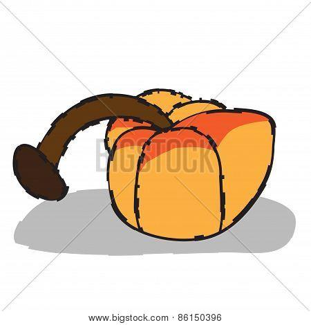 Pumpkin  illustration  fruit