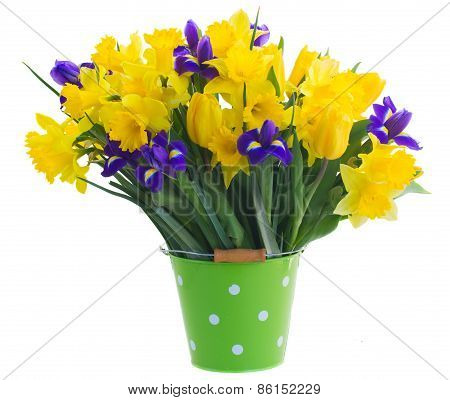 spring narcissus, tulips and irises