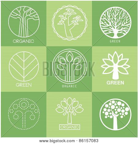 Set of different trees silhouette with roots and branches for logo, label