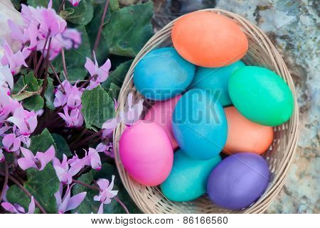 Easter Eggs Basket With Cyclamen Flowers
