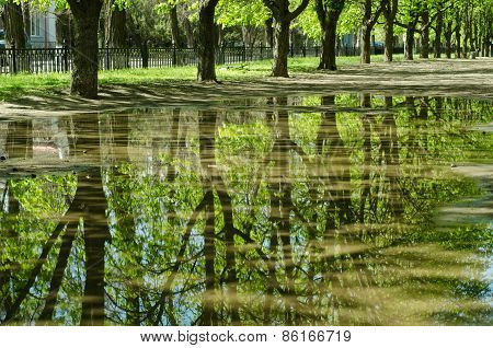 The Trees Reflected In A Puddle