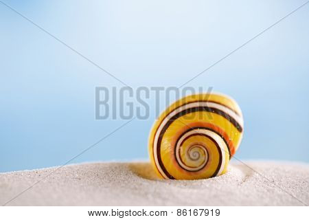 bright polymita shell on white beach sand under the sun light, shallow dof
