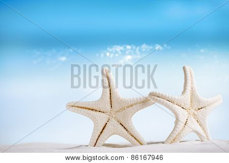 white starfish with ocean,white sand beach, sky and seascape, shallow dof