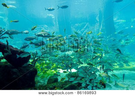 Aquarium - Underwater Scene With A Lot Of Colorful Fish