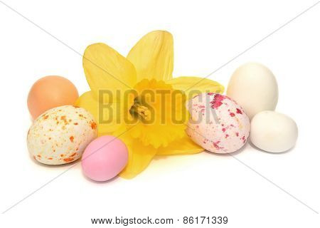 Colourful Easter Eggs And A Daffodil