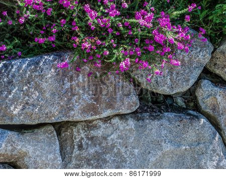 Rock Wall With Flowers Background