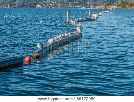 Seagulls On Pontoons
