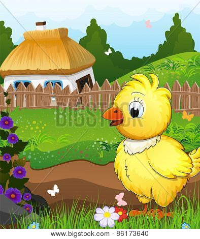 Little Chicken On A Green Meadow