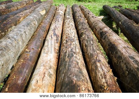 Row Of Logs For New Log Homes